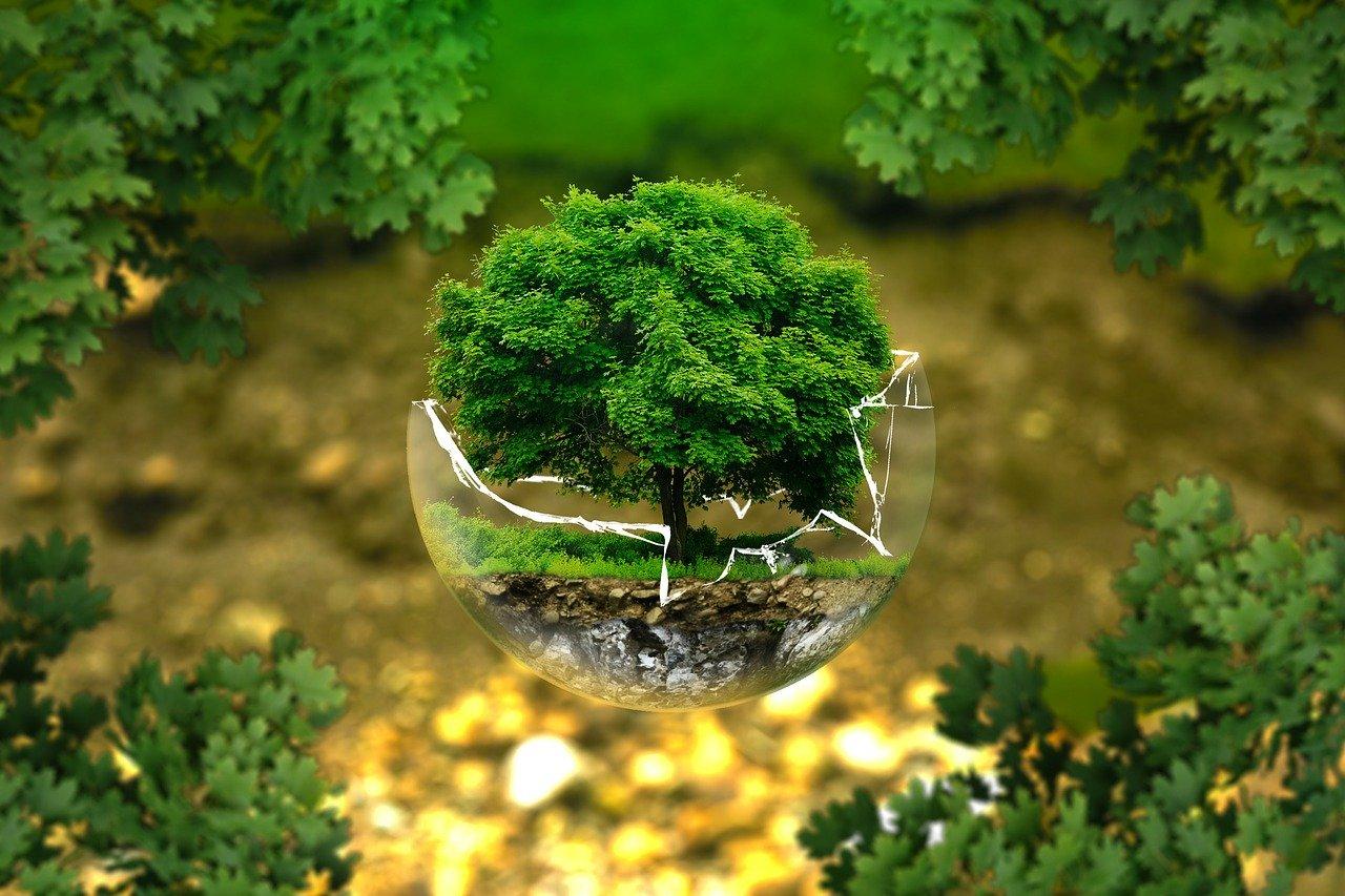 arbre miniature dans un globe en verre cassé